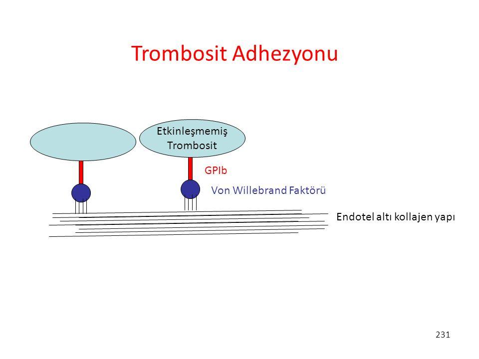 231 Endotel altı kollajen yapı Etkinleşmemiş Trombosit Von Willebrand Faktörü GPIb Trombosit Adhezyonu