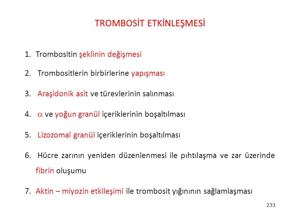 233 TROMBOSİT ETKİNLEŞMESİ 1.Trombositin şeklinin değişmesi 2. Trombositlerin birbirlerine yapışması 3. Araşidonik asit ve türevlerinin salınması 4. 