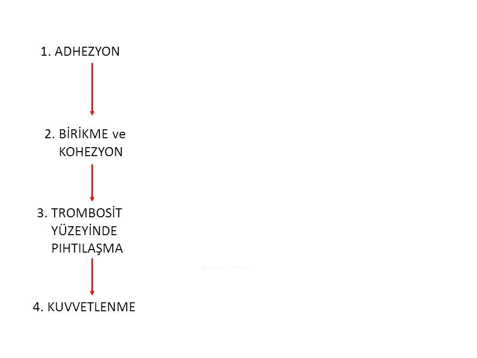 234 1. ADHEZYON 2. BİRİKME ve KOHEZYON 3. TROMBOSİT YÜZEYİNDE PIHTILAŞMA 4. KUVVETLENME Kollajen ile temas Trombosit GP Ib almacı VWF molekülleri TxA