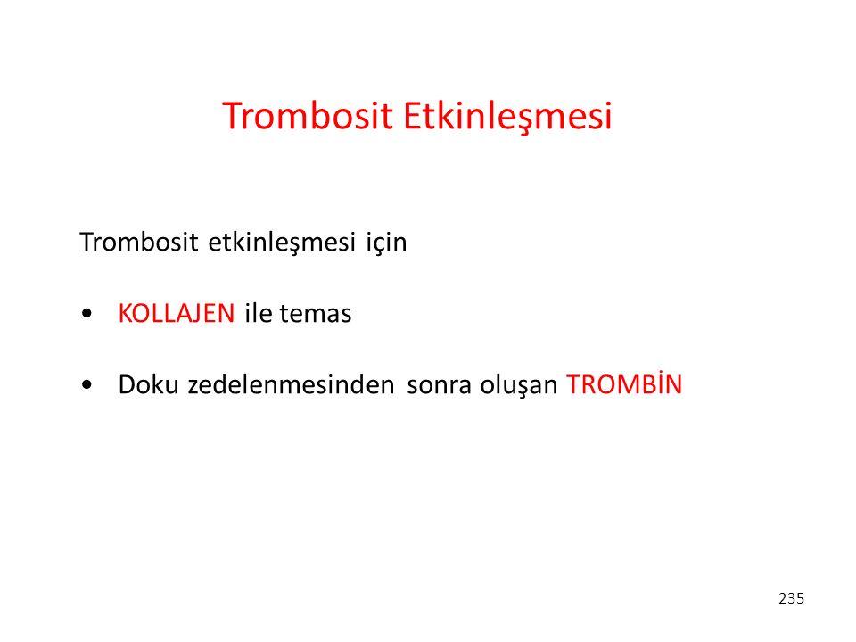 235 Trombosit Etkinleşmesi Trombosit etkinleşmesi için KOLLAJEN ile temas Doku zedelenmesinden sonra oluşan TROMBİN