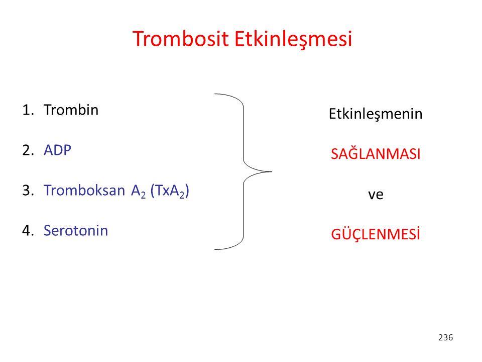 236 Trombosit Etkinleşmesi 1. Trombin 2. ADP 3. Tromboksan A 2 (TxA 2 ) 4. Serotonin Etkinleşmenin SAĞLANMASI ve GÜÇLENMESİ