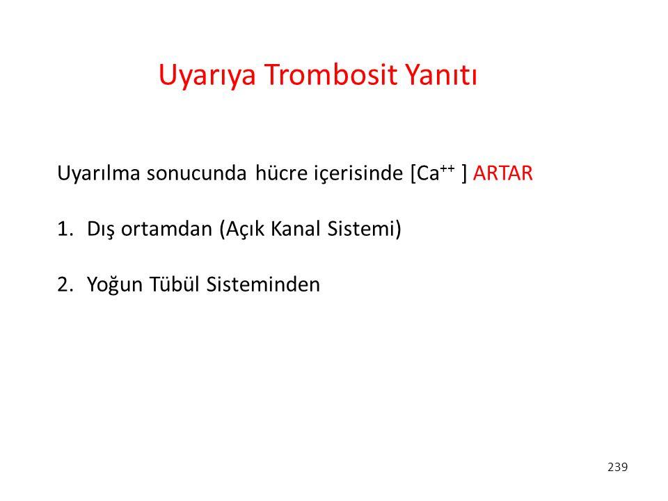 239 Uyarıya Trombosit Yanıtı Uyarılma sonucunda hücre içerisinde [Ca ++ ] ARTAR 1. Dış ortamdan (Açık Kanal Sistemi) 2. Yoğun Tübül Sisteminden