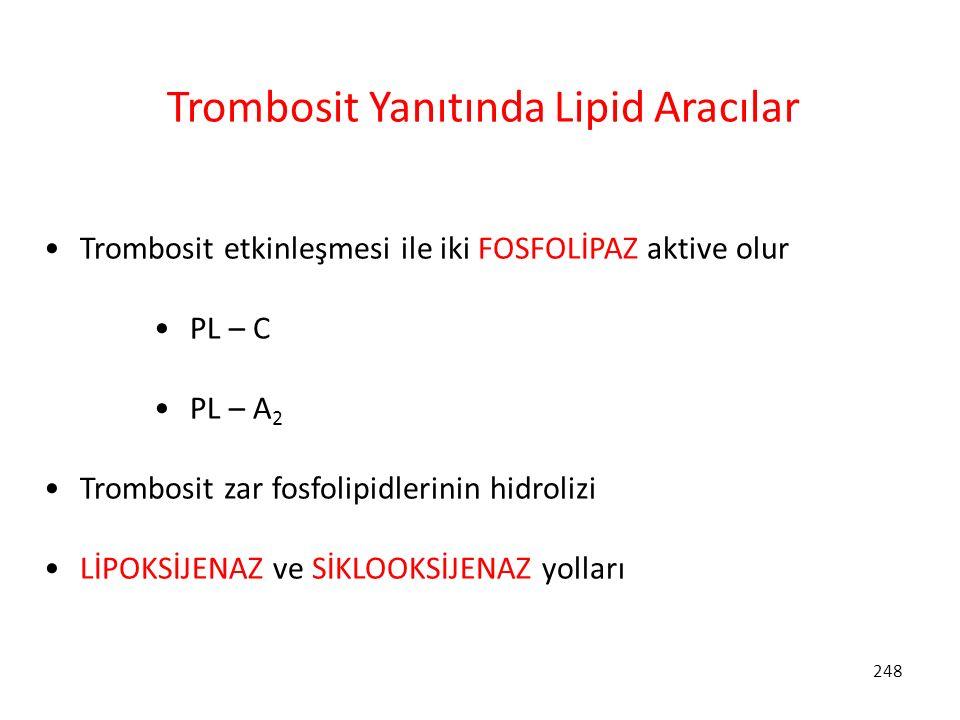 248 Trombosit Yanıtında Lipid Aracılar Trombosit etkinleşmesi ile iki FOSFOLİPAZ aktive olur PL – C PL – A 2 Trombosit zar fosfolipidlerinin hidrolizi