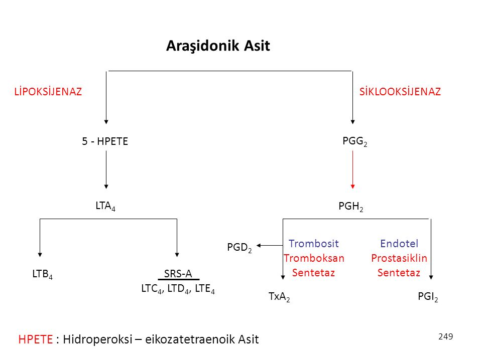 249 5 - HPETE PGG 2 LTA 4 LİPOKSİJENAZSİKLOOKSİJENAZ PGH 2 TxA 2 PGD 2 PGI 2 Trombosit Tromboksan Sentetaz Endotel Prostasiklin Sentetaz LTB 4 SRS-A L