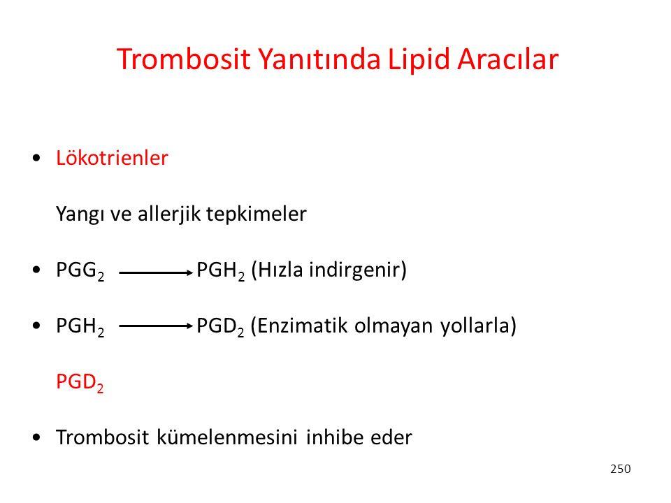 250 Trombosit Yanıtında Lipid Aracılar Lökotrienler Yangı ve allerjik tepkimeler PGG 2 PGH 2 (Hızla indirgenir) PGH 2 PGD 2 (Enzimatik olmayan yollarl