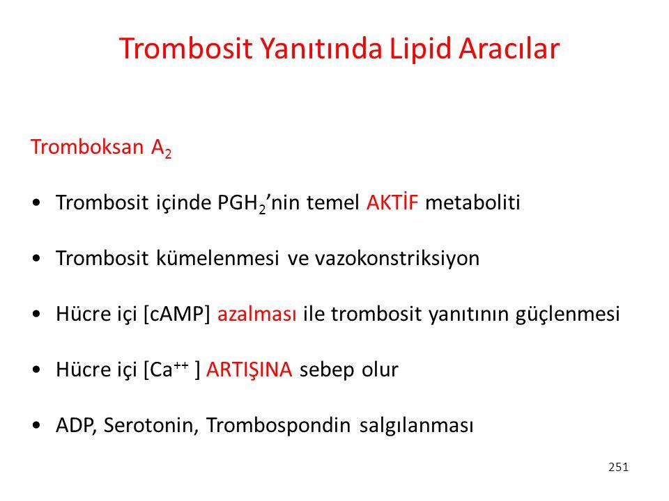 251 Trombosit Yanıtında Lipid Aracılar Tromboksan A 2 Trombosit içinde PGH 2 'nin temel AKTİF metaboliti Trombosit kümelenmesi ve vazokonstriksiyon Hü