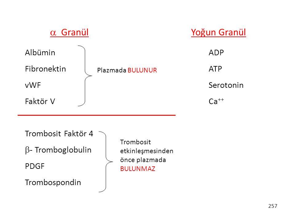 257  Granül Yoğun Granül Albümin Fibronektin vWF Faktör V Trombosit Faktör 4  - Tromboglobulin PDGF Trombospondin ADP ATP Serotonin Ca ++ Plazmada B