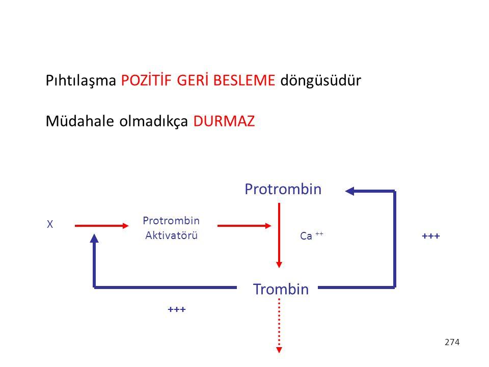 274 Pıhtılaşma POZİTİF GERİ BESLEME döngüsüdür Müdahale olmadıkça DURMAZ Protrombin Trombin Ca ++ Protrombin Aktivatörü X +++
