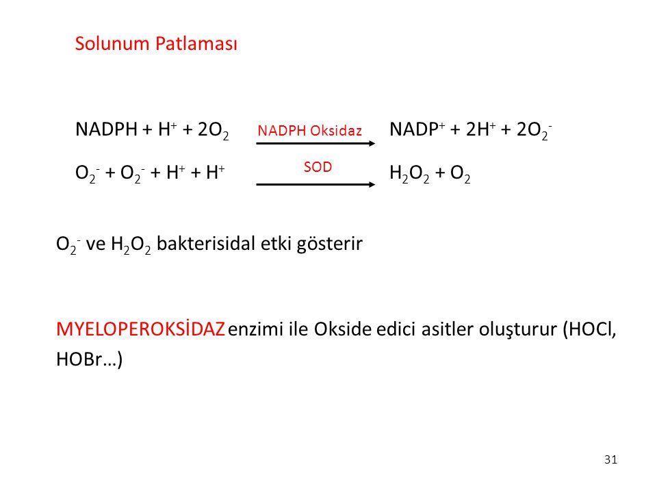31 Solunum Patlaması NADPH + H + + 2O 2 NADP + + 2H + + 2O 2 - O 2 - + O 2 - + H + + H + H 2 O 2 + O 2 O 2 - ve H 2 O 2 bakterisidal etki gösterir MYE