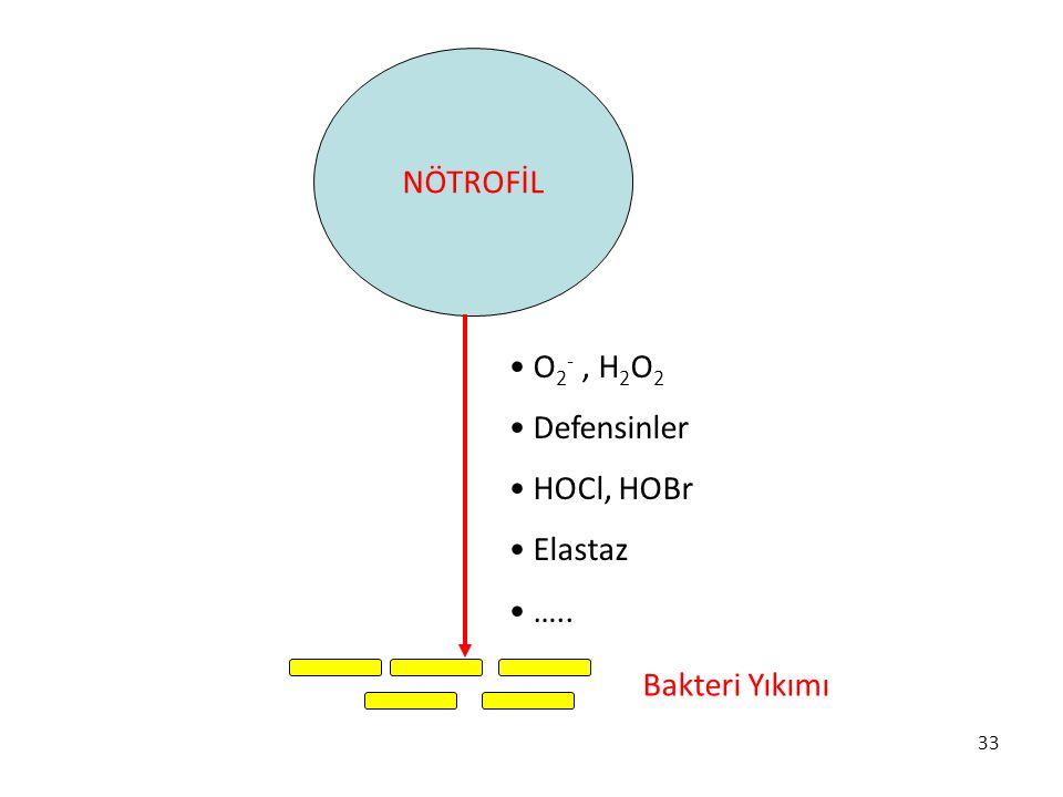 33 NÖTROFİL Bakteri Yıkımı O 2 -, H 2 O 2 Defensinler HOCl, HOBr Elastaz …..