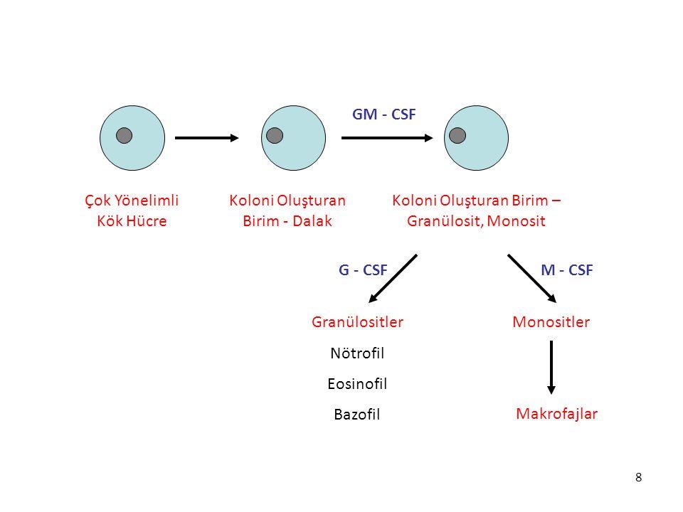 8 Çok Yönelimli Kök Hücre Koloni Oluşturan Birim - Dalak Koloni Oluşturan Birim – Granülosit, Monosit Granülositler Nötrofil Eosinofil Bazofil Monosit