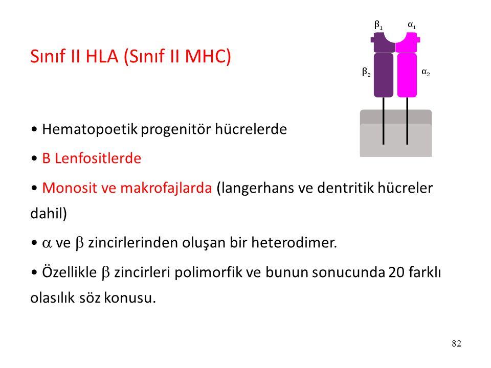 82 Sınıf II HLA (Sınıf II MHC) Hematopoetik progenitör hücrelerde B Lenfositlerde Monosit ve makrofajlarda (langerhans ve dentritik hücreler dahil) 
