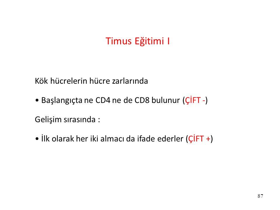 87 Timus Eğitimi I Kök hücrelerin hücre zarlarında Başlangıçta ne CD4 ne de CD8 bulunur (ÇİFT -) Gelişim sırasında : İlk olarak her iki almacı da ifad
