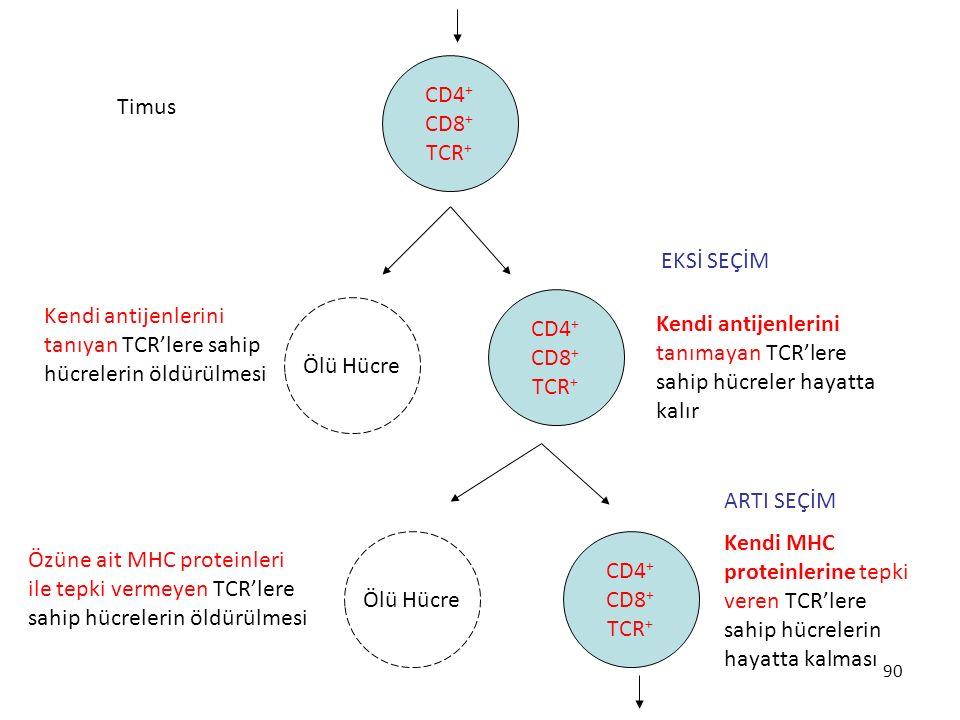 90 Ölü Hücre Timus CD4 + CD8 + TCR + Ölü Hücre CD4 + CD8 + TCR + CD4 + CD8 + TCR + Kendi antijenlerini tanıyan TCR'lere sahip hücrelerin öldürülmesi K