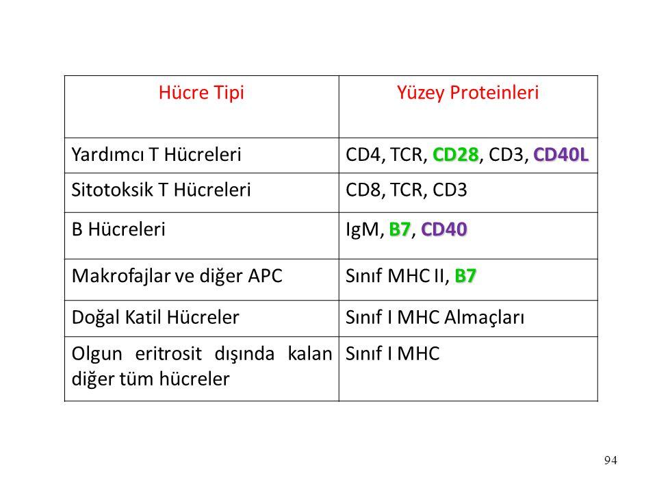 94 Hücre TipiYüzey Proteinleri Yardımcı T Hücreleri CD28CD40L CD4, TCR, CD28, CD3, CD40L Sitotoksik T HücreleriCD8, TCR, CD3 B Hücreleri B7CD40 IgM, B