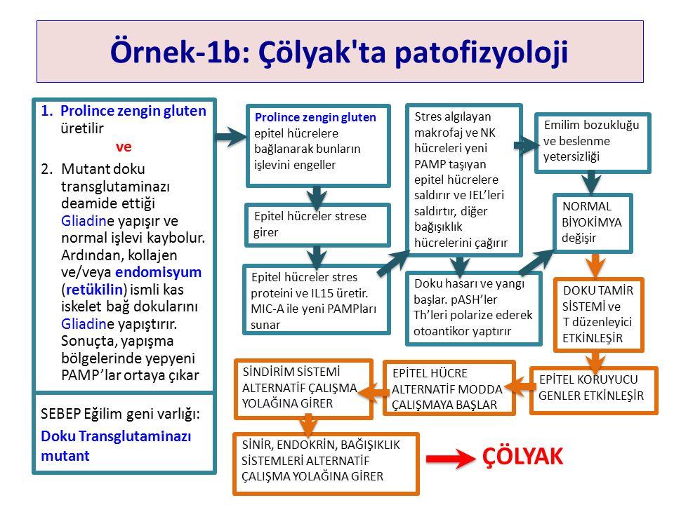 Örnek-1b: Çölyak ta patofizyoloji 1.Prolince zengin gluten üretilir ve 2.Mutant doku transglutaminazı deamide ettiği Gliadine yapışır ve normal işlevi kaybolur.