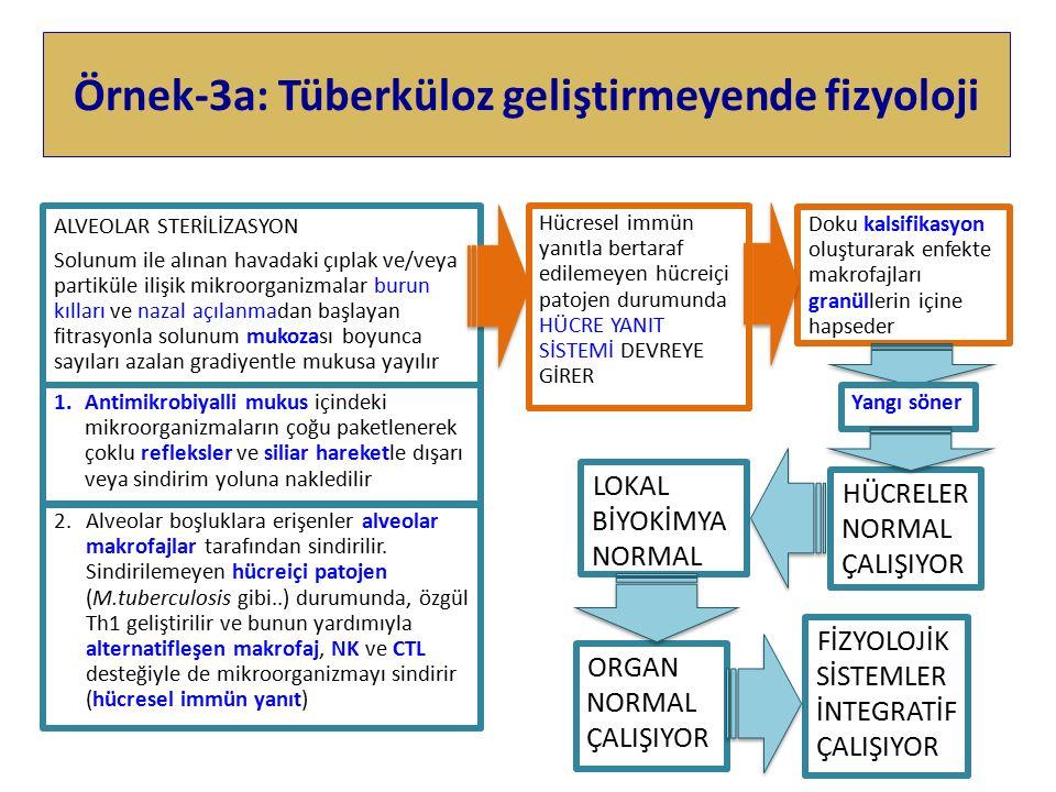 Örnek-3a: Tüberküloz geliştirmeyende fizyoloji ALVEOLAR STERİLİZASYON Solunum ile alınan havadaki çıplak ve/veya partiküle ilişik mikroorganizmalar burun kılları ve nazal açılanmadan başlayan fitrasyonla solunum mukozası boyunca sayıları azalan gradiyentle mukusa yayılır 2.Alveolar boşluklara erişenler alveolar makrofajlar tarafından sindirilir.