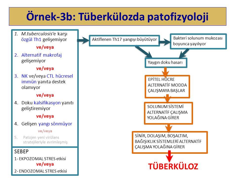 Örnek-3b: Tüberkülozda patofizyoloji 1.M.tuberculosis'e karşı özgül Th1 gelişemiyor ve/veya 2.Alternatif makrofaj gelişemiyor ve/veya 3.NK ve/veya CTL hücresel immün yanıta destek olamıyor ve/veya 4.Doku kalsifikasyon yanıtı geliştiremiyor ve/veya 4.Gelişen yangı sönmüyor ve/veya 5.Patojen yeni virülans stratejileriyle evrimleşmiş SEBEP 1- EKPOZOMAL STRES etkisi ve/veya 2- ENDOZOMAL STRES etkisi Bakteri solunum mukozası boyunca yayılıyor Yaygın doku hasarı TÜBERKÜLOZ Aktiflenen Th17 yangıyı büyütüyor EPİTEL HÜCRE ALTERNATİF MODDA ÇALIŞMAYA BAŞLAR SOLUNUM SİSTEMİ ALTERNATİF ÇALIŞMA YOLAĞINA GİRER SİNİR, DOLAŞIM, BOŞALTIM, BAĞIŞIKLIK SİSTEMLERİ ALTERNATİF ÇALIŞMA YOLAĞINA GİRER