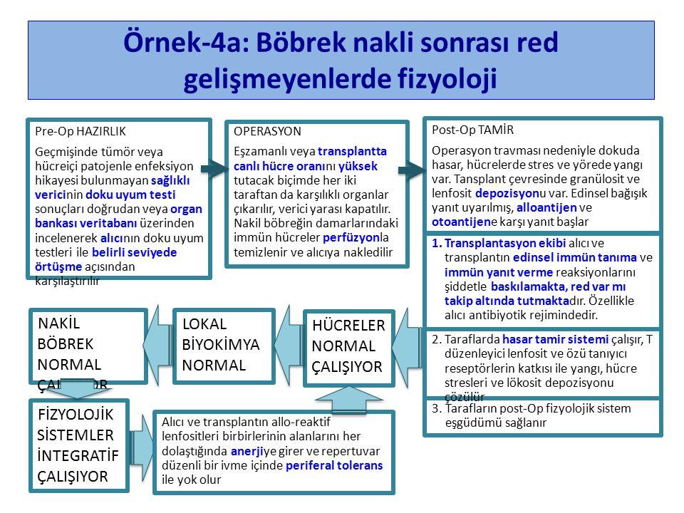 Örnek-4a: Böbrek nakli sonrası red gelişmeyenlerde fizyoloji Post-Op TAMİR Operasyon travması nedeniyle dokuda hasar, hücrelerde stres ve yörede yangı var.