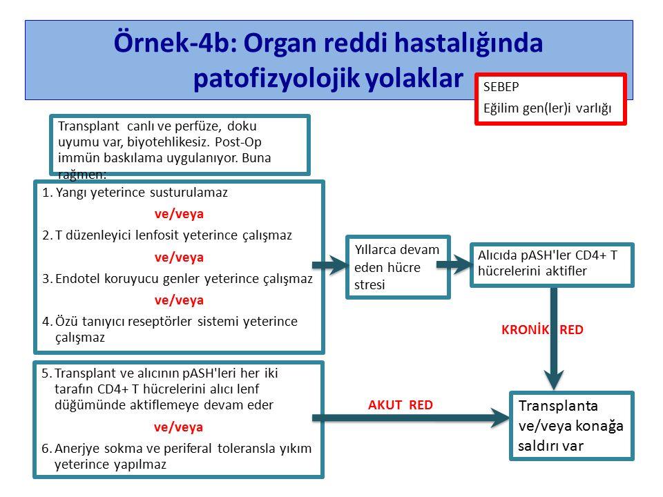 Örnek-4b: Organ reddi hastalığında patofizyolojik yolaklar 1.Yangı yeterince susturulamaz ve/veya 2.T düzenleyici lenfosit yeterince çalışmaz ve/veya 3.Endotel koruyucu genler yeterince çalışmaz ve/veya 4.Özü tanıyıcı reseptörler sistemi yeterince çalışmaz Transplant canlı ve perfüze, doku uyumu var, biyotehlikesiz.