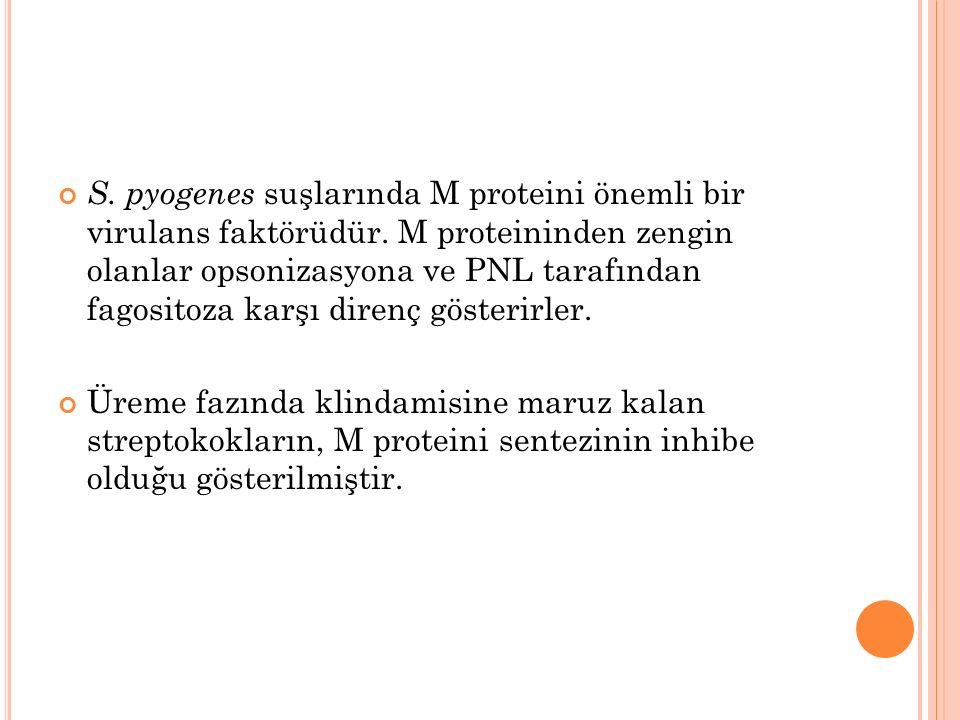 S. pyogenes suşlarında M proteini önemli bir virulans faktörüdür.