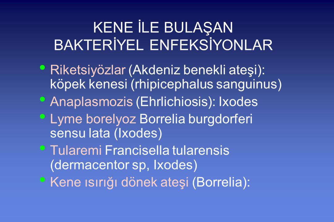 KENE İLE BULAŞAN BAKTERİYEL ENFEKSİYONLAR Riketsiyözlar (Akdeniz benekli ateşi): köpek kenesi (rhipicephalus sanguinus) Anaplasmozis (Ehrlichiosis): Ixodes Lyme borelyoz Borrelia burgdorferi sensu lata (Ixodes) Tularemi Francisella tularensis (dermacentor sp, Ixodes) Kene ısırığı dönek ateşi (Borrelia):
