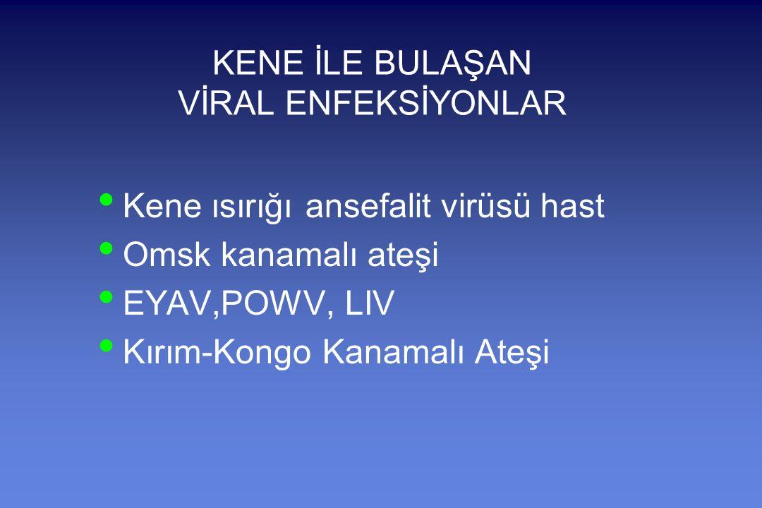 KENE İLE BULAŞAN VİRAL ENFEKSİYONLAR Kene ısırığı ansefalit virüsü hast Omsk kanamalı ateşi EYAV,POWV, LIV Kırım-Kongo Kanamalı Ateşi