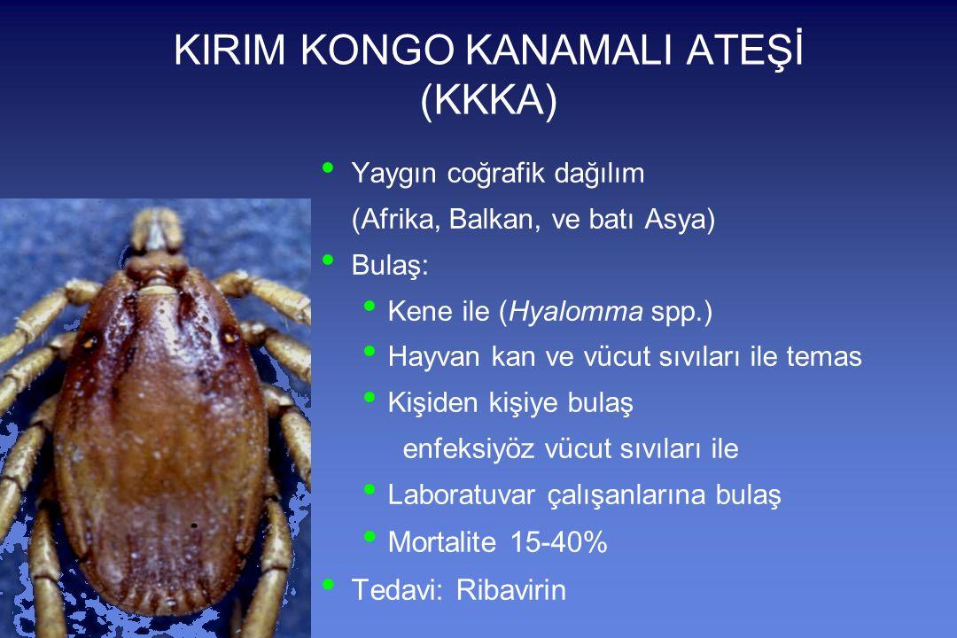 KIRIM KONGO KANAMALI ATEŞİ (KKKA) Yaygın coğrafik dağılım (Afrika, Balkan, ve batı Asya) Bulaş: Kene ile (Hyalomma spp.) Hayvan kan ve vücut sıvıları ile temas Kişiden kişiye bulaş enfeksiyöz vücut sıvıları ile Laboratuvar çalışanlarına bulaş Mortalite 15-40% Tedavi: Ribavirin
