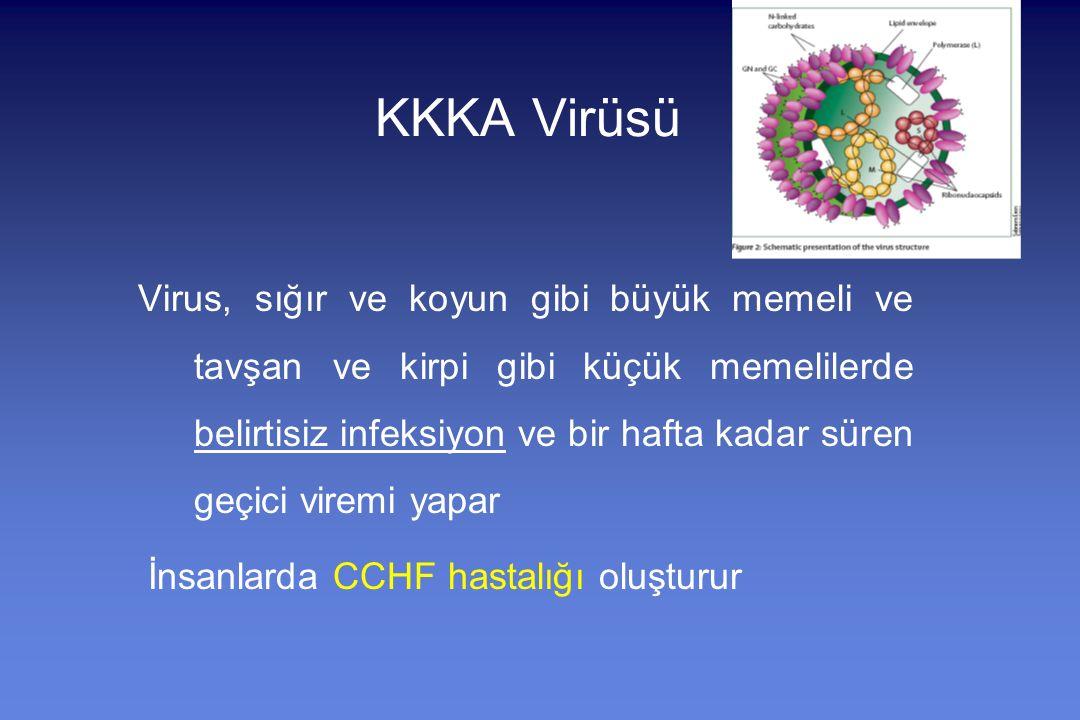 KKKA Virüsü Virus, sığır ve koyun gibi büyük memeli ve tavşan ve kirpi gibi küçük memelilerde belirtisiz infeksiyon ve bir hafta kadar süren geçici viremi yapar İnsanlarda CCHF hastalığı oluşturur