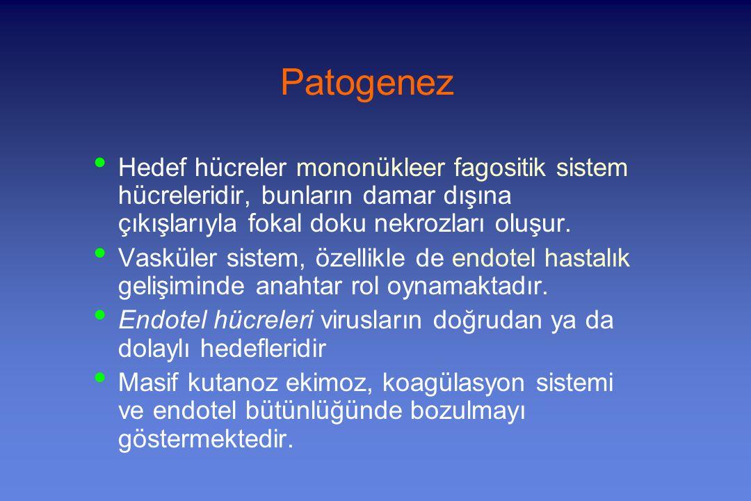 Patogenez Hedef hücreler mononükleer fagositik sistem hücreleridir, bunların damar dışına çıkışlarıyla fokal doku nekrozları oluşur.