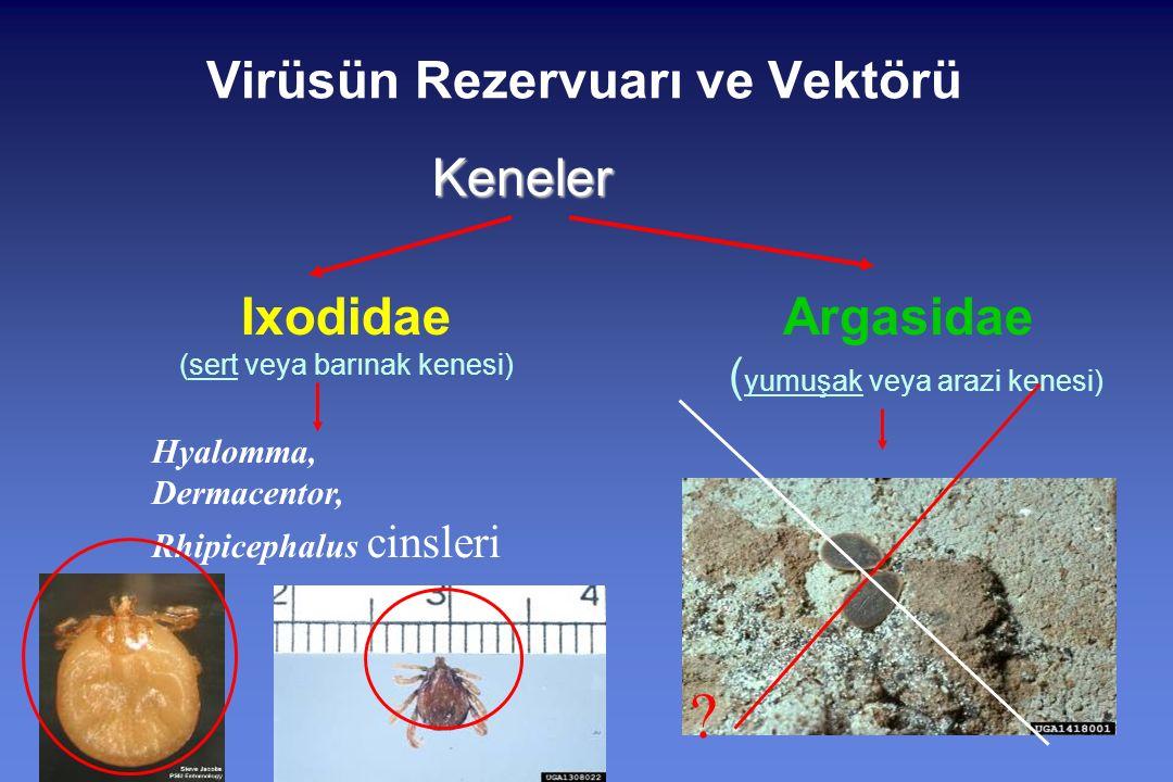 Virüsün Rezervuarı ve VektörüKeneler Ixodidae (sert veya barınak kenesi) Argasidae ( yumuşak veya arazi kenesi) Hyalomma, Dermacentor, Rhipicephalus cinsleri ?