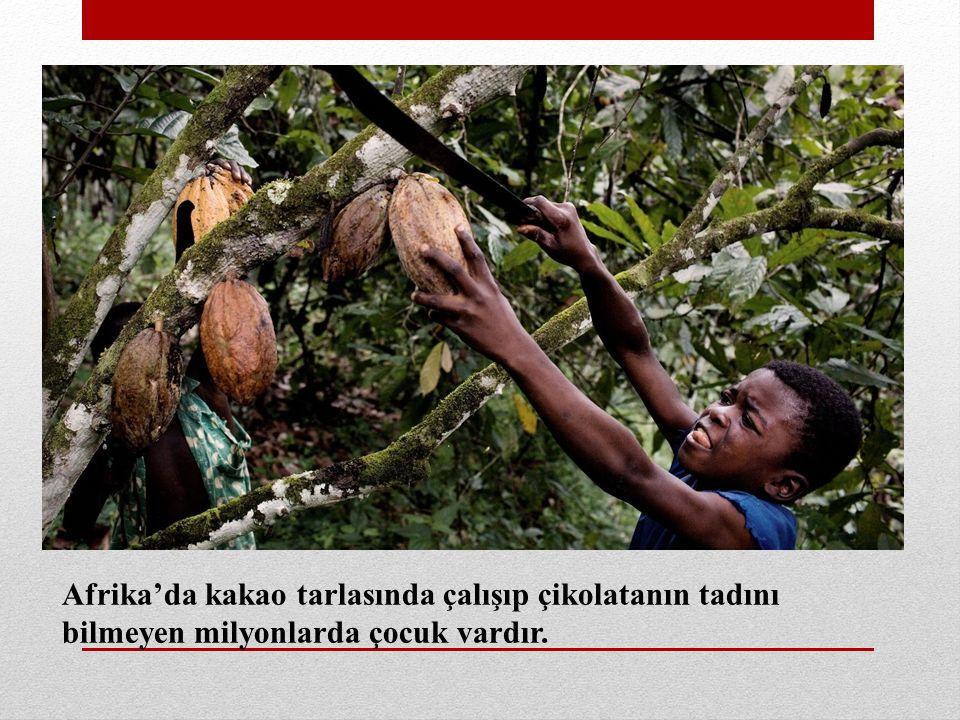 Afrika'da kakao tarlasında çalışıp çikolatanın tadını bilmeyen milyonlarda çocuk vardır.