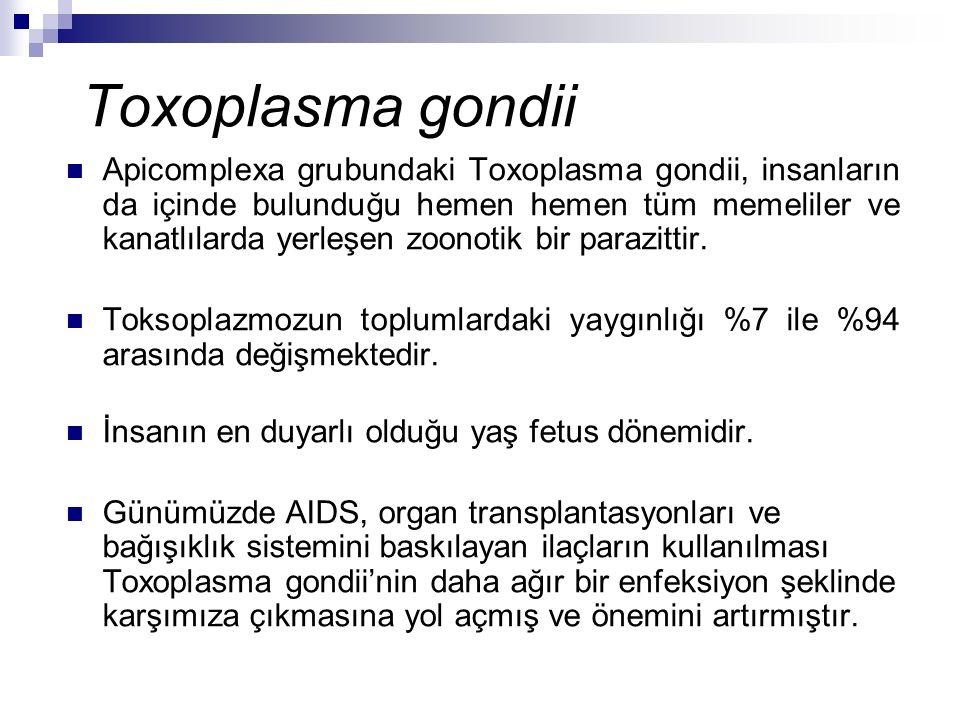 Toxoplasma gondii Apicomplexa grubundaki Toxoplasma gondii, insanların da içinde bulunduğu hemen hemen tüm memeliler ve kanatlılarda yerleşen zoonotik bir parazittir.