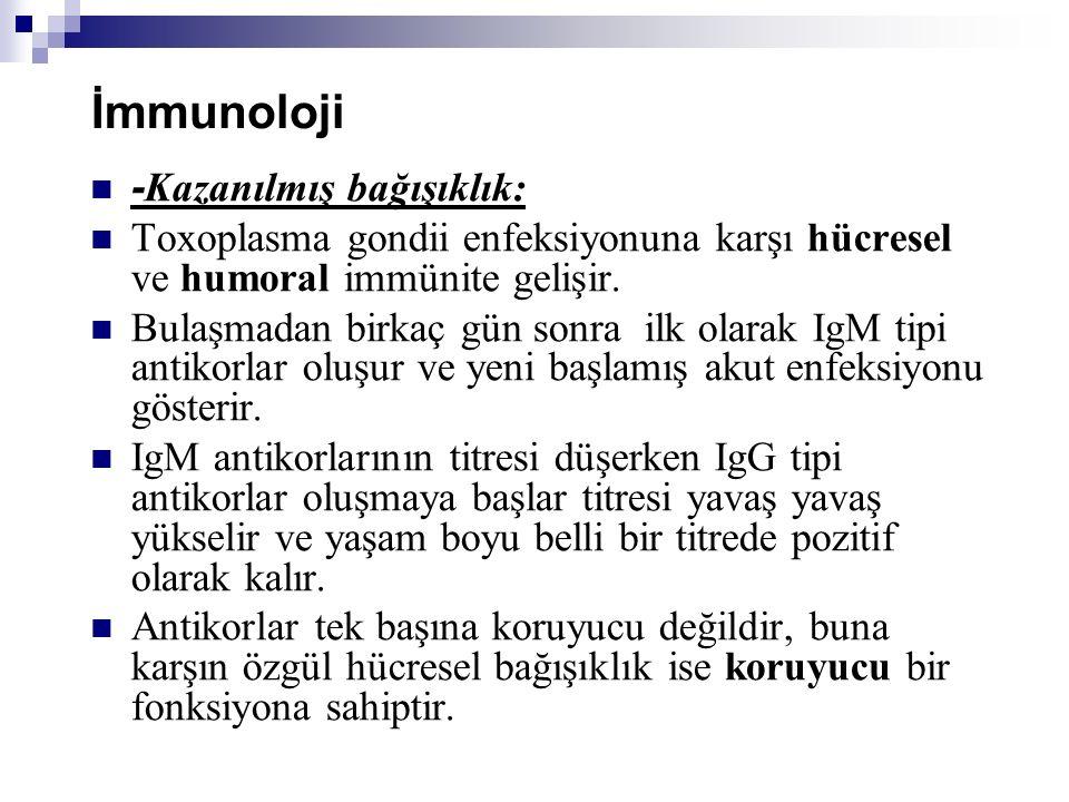 İmmunoloji - Kazanılmış bağışıklık: Toxoplasma gondii enfeksiyonuna karşı hücresel ve humoral immünite gelişir. Bulaşmadan birkaç gün sonra ilk olarak