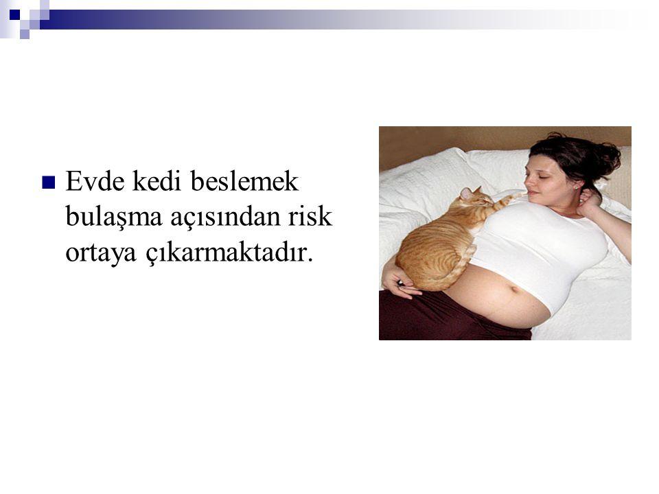 Evde kedi beslemek bulaşma açısından risk ortaya çıkarmaktadır.