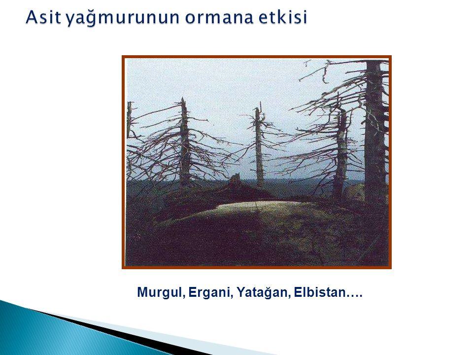 Murgul, Ergani, Yatağan, Elbistan….