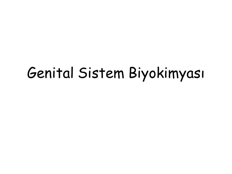 Genital Sistem Biyokimyası