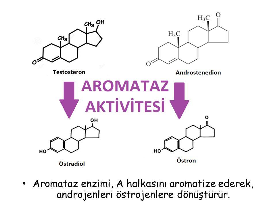 Aromataz enzimi, A halkasını aromatize ederek, androjenleri östrojenlere dönüştürür.