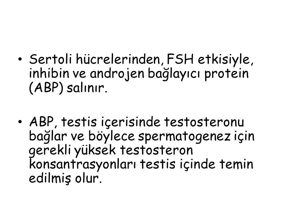 Sertoli hücrelerinden, FSH etkisiyle, inhibin ve androjen bağlayıcı protein (ABP) salınır.