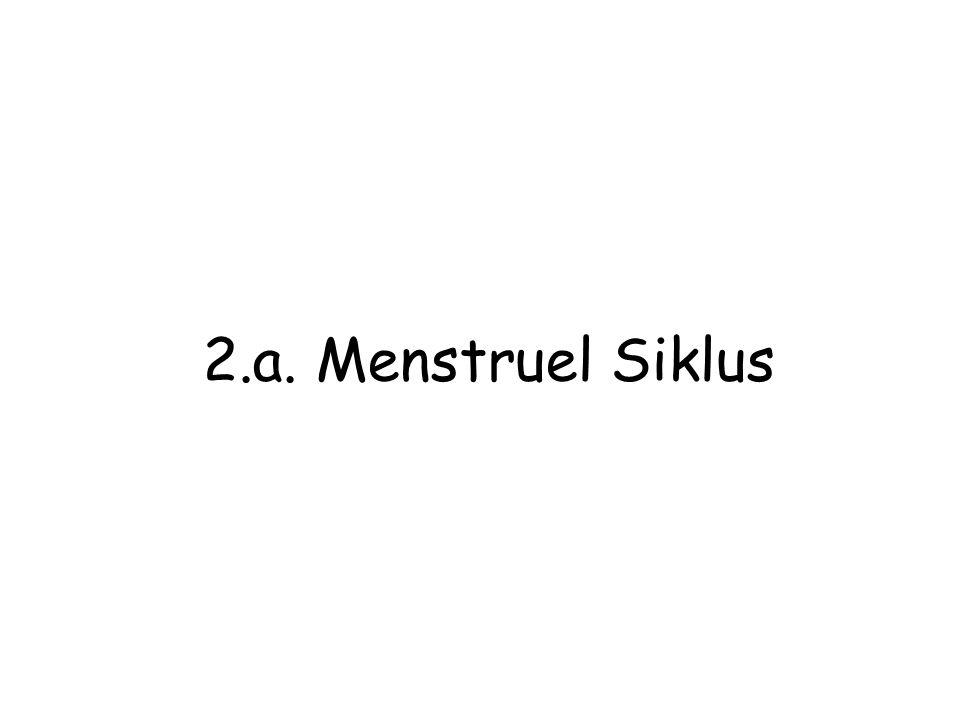 2.a. Menstruel Siklus
