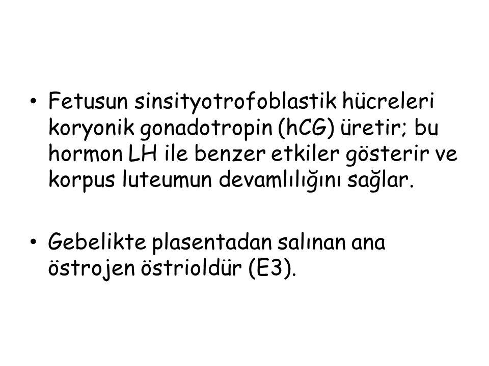 Fetusun sinsityotrofoblastik hücreleri koryonik gonadotropin (hCG) üretir; bu hormon LH ile benzer etkiler gösterir ve korpus luteumun devamlılığını sağlar.
