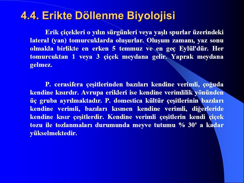 4.4. Erikte Döllenme Biyolojisi Erik çiçekleri o yılın sürgünleri veya yaşlı spurlar üzerindeki lateral (yan) tomurcuklarda oluşurlar. Oluşum zamanı,