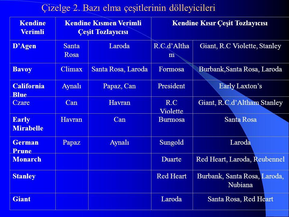 Kendine Verimli Kendine Kısmen Verimli Çeşit Tozlayıcısı Kendine Kısır Çeşit Tozlayıcısı D'AgenSanta Rosa LarodaR.C.d'Altha m Giant, R.C Violette, Sta