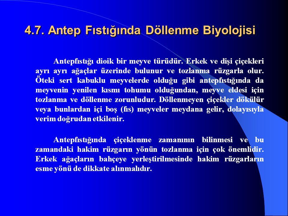 4.7. Antep Fıstığında Döllenme Biyolojisi Antepfıstığı dioik bir meyve türüdür. Erkek ve dişi çiçekleri ayrı ayrı ağaçlar üzerinde bulunur ve tozlanma
