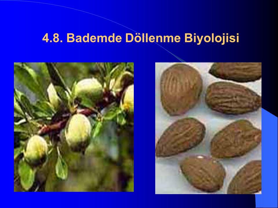 4.8. Bademde Döllenme Biyolojisi