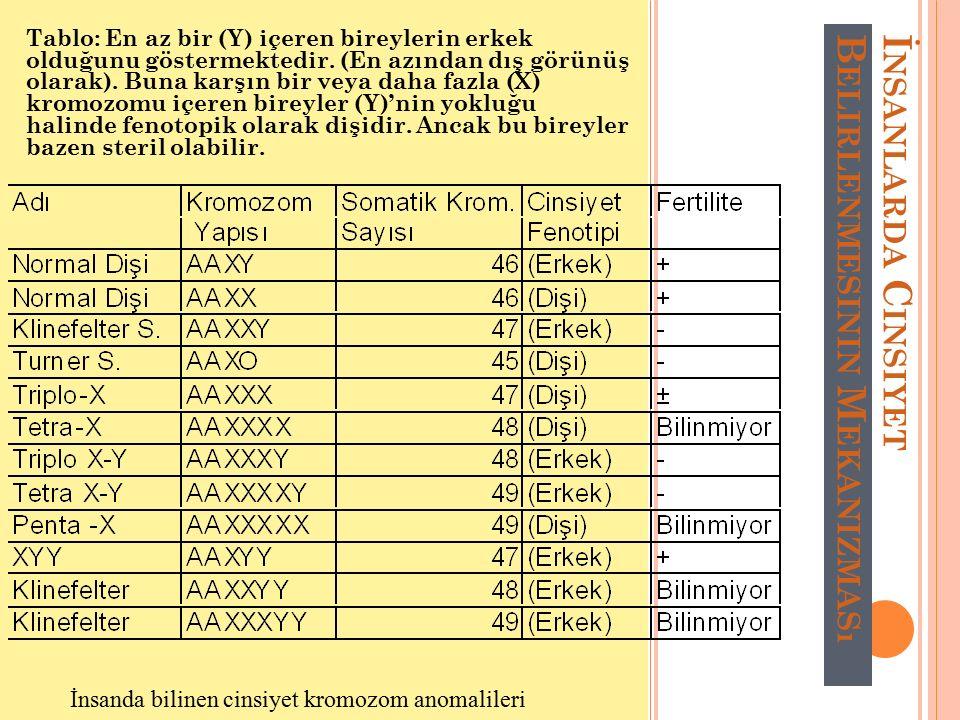 İ NSANLARDA C INSIYET B ELIRLENMESININ M EKANIZMASı Tablo: En az bir (Y) içeren bireylerin erkek olduğunu göstermektedir. (En azından dış görünüş olar