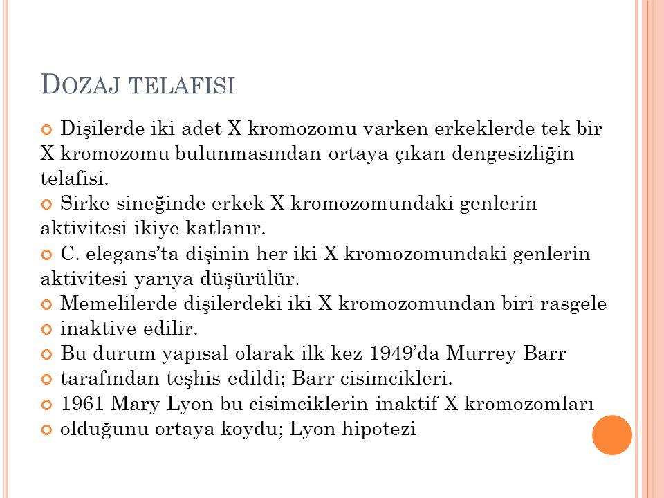 D OZAJ TELAFISI Dişilerde iki adet X kromozomu varken erkeklerde tek bir X kromozomu bulunmasından ortaya çıkan dengesizliğin telafisi. Sirke sineğind