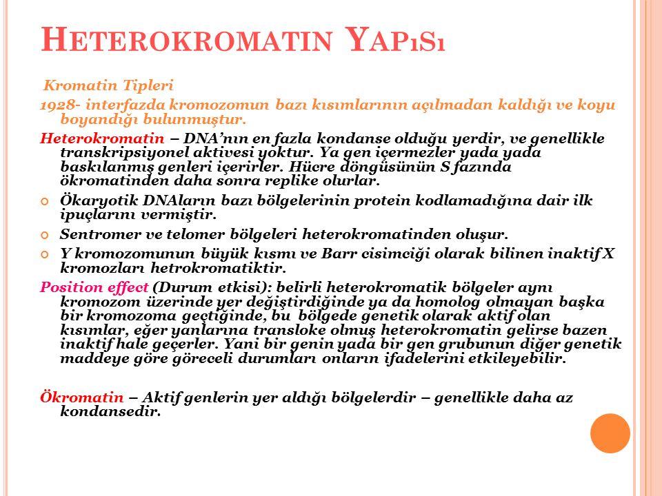 H ETEROKROMATIN Y APıSı Kromatin Tipleri 1928- interfazda kromozomun bazı kısımlarının açılmadan kaldığı ve koyu boyandığı bulunmuştur. Heterokromatin