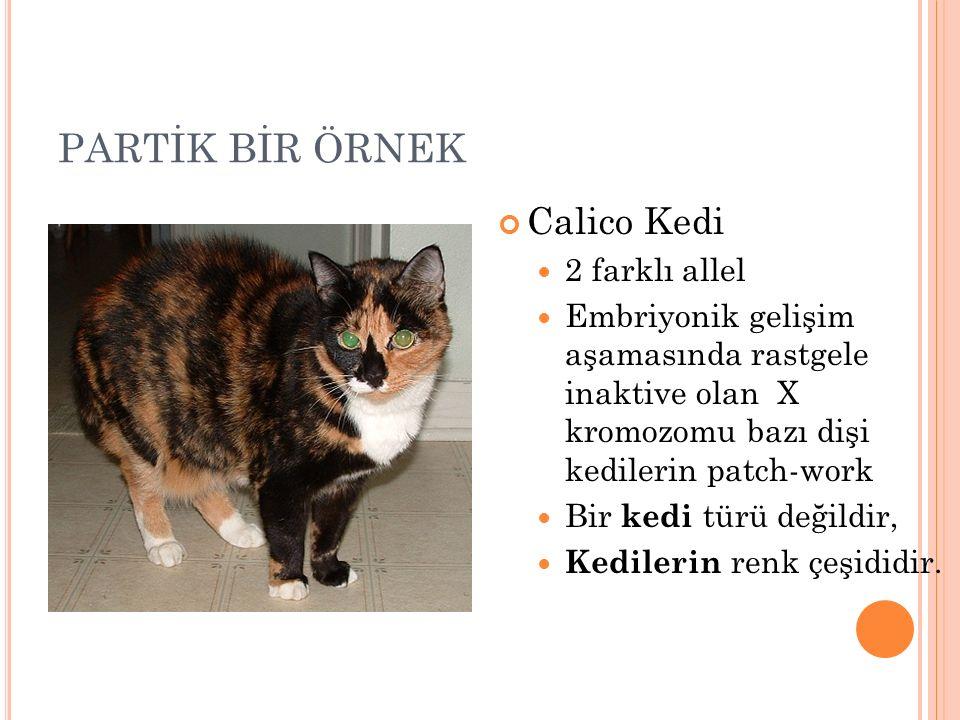 PARTİK BİR ÖRNEK Calico Kedi 2 farklı allel Embriyonik gelişim aşamasında rastgele inaktive olan X kromozomu bazı dişi kedilerin patch-work Bir kedi t