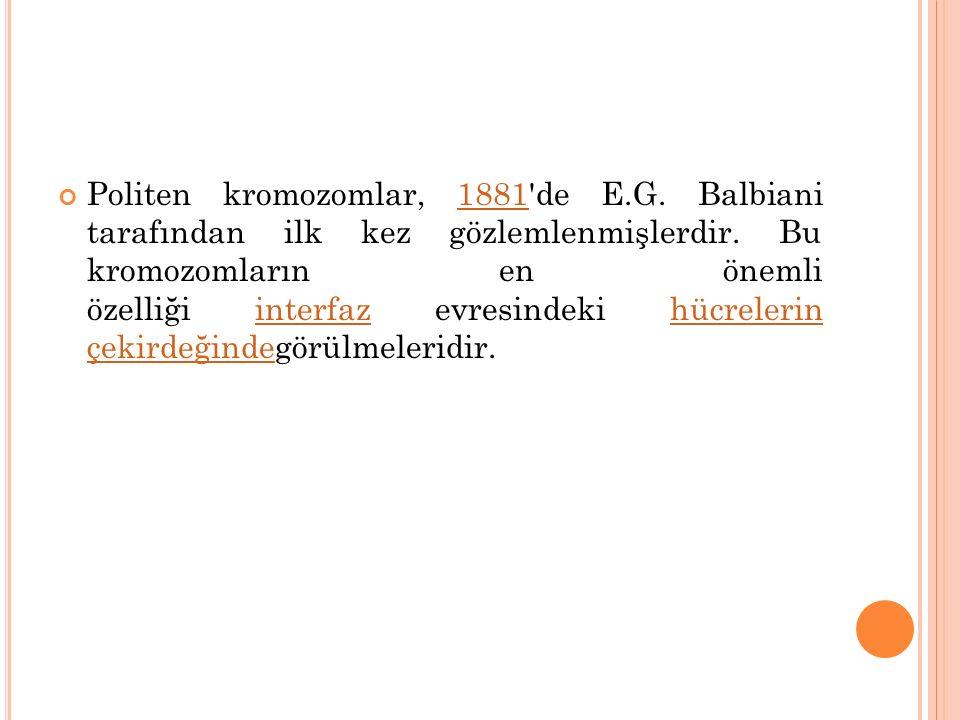 Politen kromozomlar, 1881'de E.G. Balbiani tarafından ilk kez gözlemlenmişlerdir. Bu kromozomların en önemli özelliği interfaz evresindeki hücrelerin